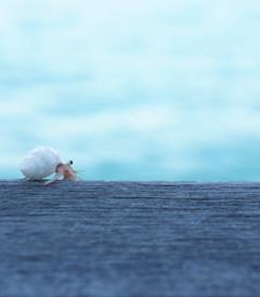 [马累游记图片] 马尔代夫——无暇发呆