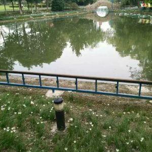 泗洲公园旅游景点攻略图