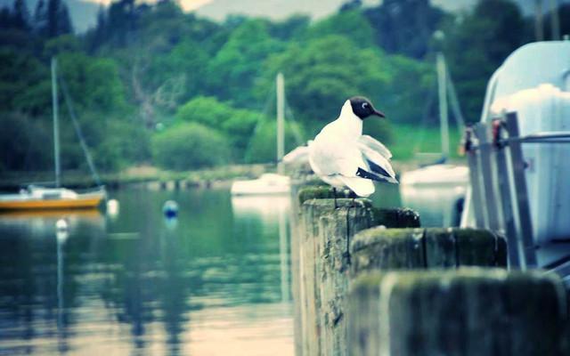 美食 美景 美丽心情 英格兰湖区