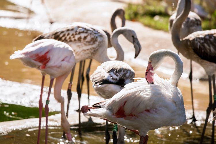 美泉宮動物園1
