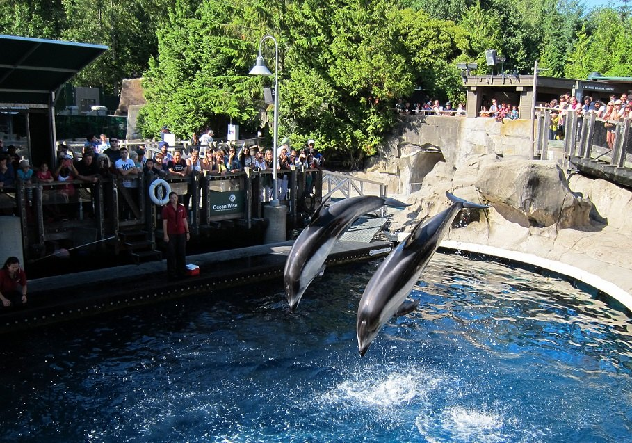温哥华水族馆旅游景点图片