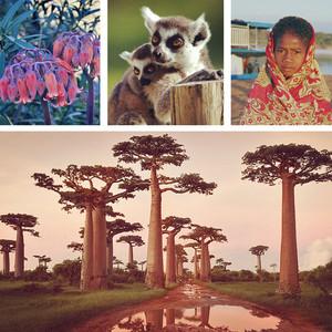 马达加斯加游记图文-世外天堂【非洲 马达加斯加】猴面包树 狐猴 仿若神迹