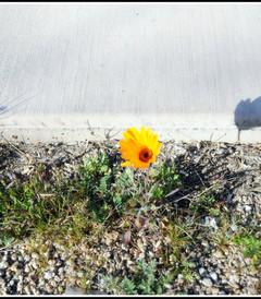 [凤凰城游记图片] 精彩在路上——美国西海岸18日自驾游之凤凰城菲尼克斯