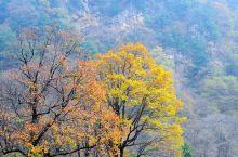 【陕西】秋日太白 层林尽染最美时