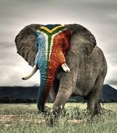 [开普敦游记图片] 南非开普顿+约翰內斯堡+太阳城+肯尼亚12日[补]———一个人的旅行