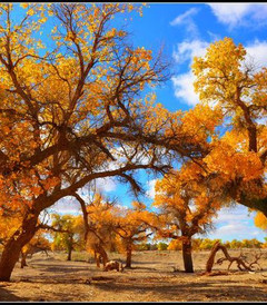 [额济纳旗游记图片] #如意甘肃游#秋天的旅途---敦煌、额济纳、张掖