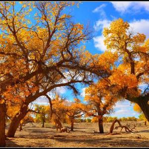 额济纳旗游记图文-#如意甘肃游#秋天的旅途---敦煌、额济纳、张掖
