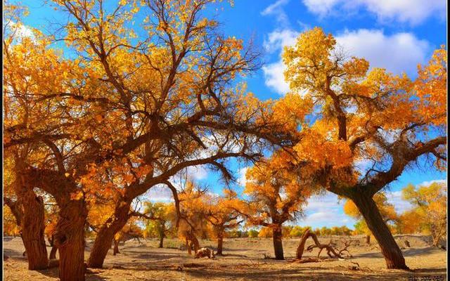 #如意甘肃游#秋天的旅途---敦煌、额济纳、张掖