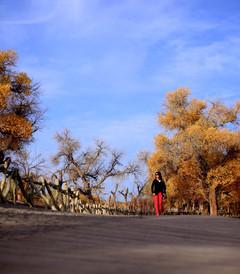 [额济纳旗游记图片] 2014国庆兰州-张掖丹霞景区-巴丹吉林沙漠-额济纳胡杨林、居延海-银川九日游