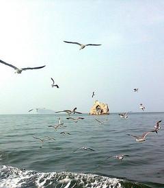 [长岛游记图片] 风筝的旅行·环游山东14日