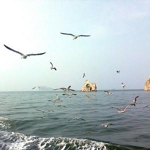 蓬莱游记图文-风筝的旅行·环游山东14日