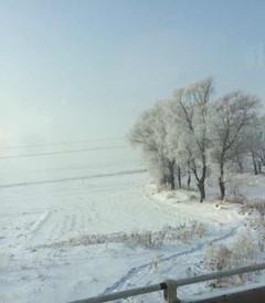 [哈尔滨游记图片] 2013年一个人的哈尔滨之旅
