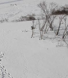 [哈尔滨游记图片] 【这世间所有的白……】记哈尔滨-亚布力自由行