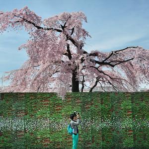 日本游记图文-缪出品 - || 東洋·樱の季節 ||