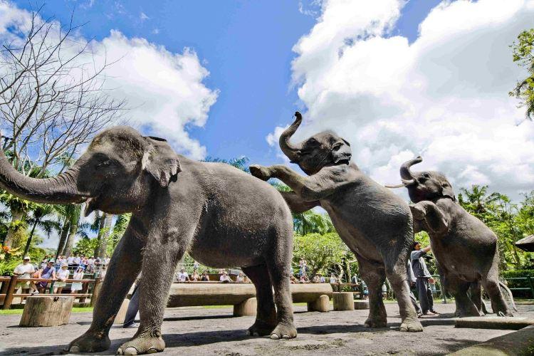 Bali Elephant Park3