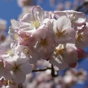 南部县游记图文-日本赏樱季