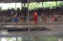 龙虎园的鳄鱼表演好精彩,好刺激