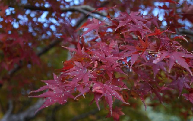 枫红季,日本四国行(DAY1)