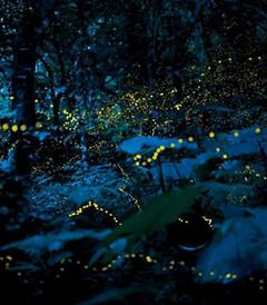 [雪兰莪州游记图片] 瓜拉雪兰莪—寻找童年记忆中的萤火虫