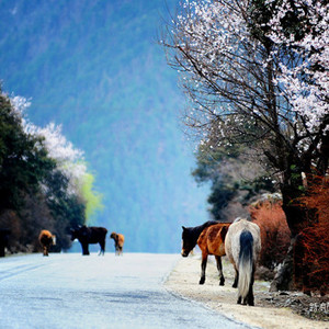 波密游记图文-天上西藏,云上林芝,林芝,波密然乌日喀则摄影旅行攻略