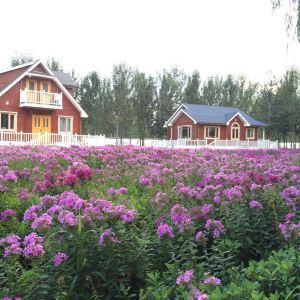 梦幻紫海香草庄园旅游景点攻略图