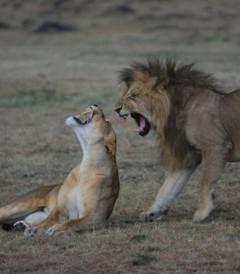 [马赛马拉国家公园游记图片] 肯尼亚.马赛马拉之旅之(三)