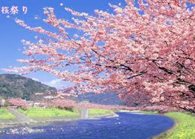 春樱绝景在日本
