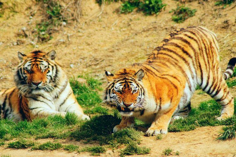 Hangzhou Safari Park1