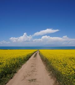 [青海湖游记图片] 这里离天空很近,这里离尘世很远