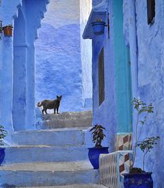 [摩洛哥游记图片] 【旅途】打翻了天空,摩洛哥绝美小镇舍夫沙万,童话一样的地方
