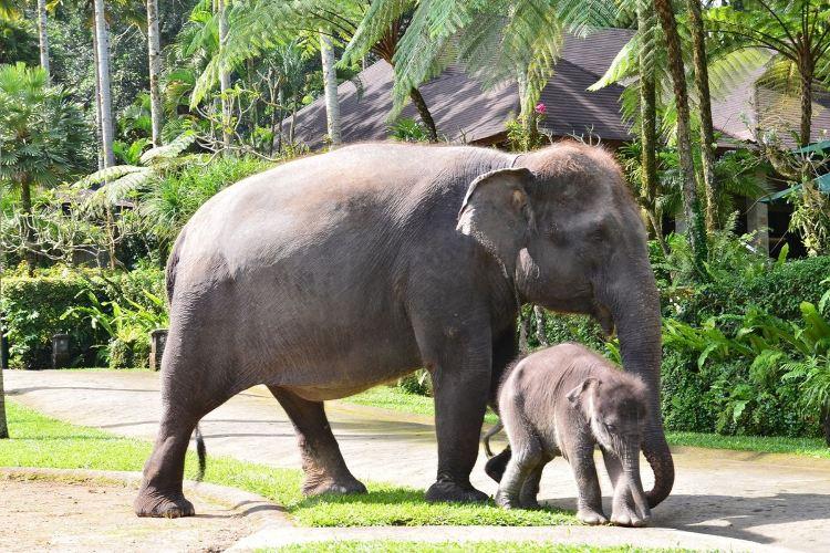 Bali Elephant Park2