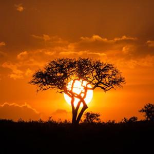 马赛马拉国家公园游记图文-【肯尼亚】马塞马拉东非五霸,柏哥利亚湖火烈鸟粉红天堂,东非7天Safari精华美图&拍照小技巧