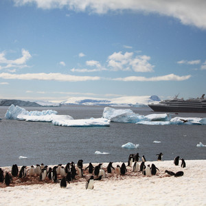 南极洲游记图文-纯美南极