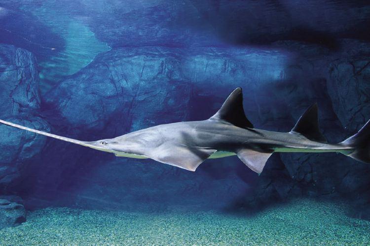 Shanghai Ocean Aquarium2