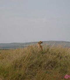 [肯尼亚游记图片] 肯尼亚 难忘的Safari之旅