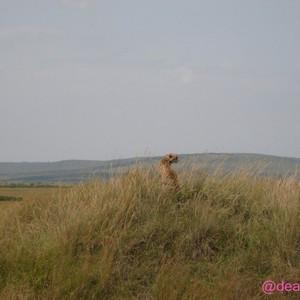 马赛马拉国家公园游记图文-肯尼亚 难忘的Safari之旅