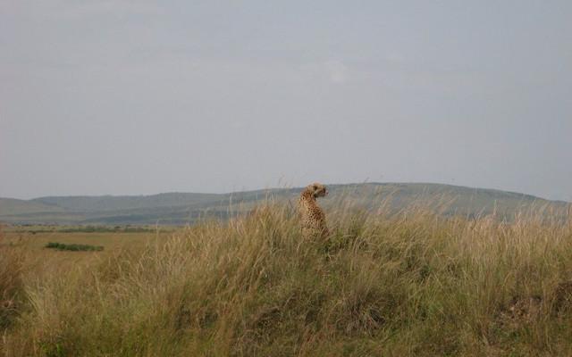 肯尼亚 难忘的Safari之旅