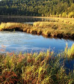 [兴安盟游记图片] 一路向北----呼伦贝尔大草原夏日畅快淋漓的撒欢行