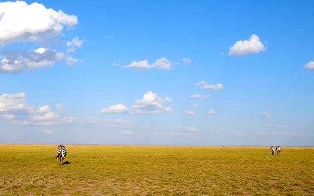 我的肯尼亚探险之旅1(安博塞利+阿布戴尔+肯尼亚山度假村)