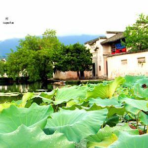 黄山风景区游记图文-我们的旅途之南京、扬州、镇江、宏村、黄山