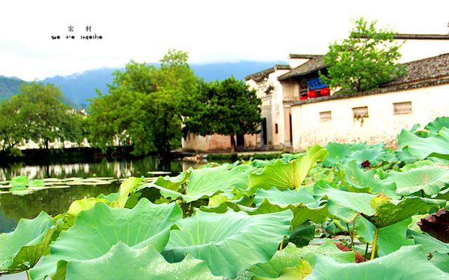 我们的旅途之南京、扬州、镇江、宏村、黄山