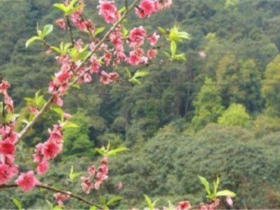 Taohuachong Forest Park