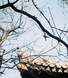 [北京游记图片] 北京文艺之旅(用胶片记录行走时光)