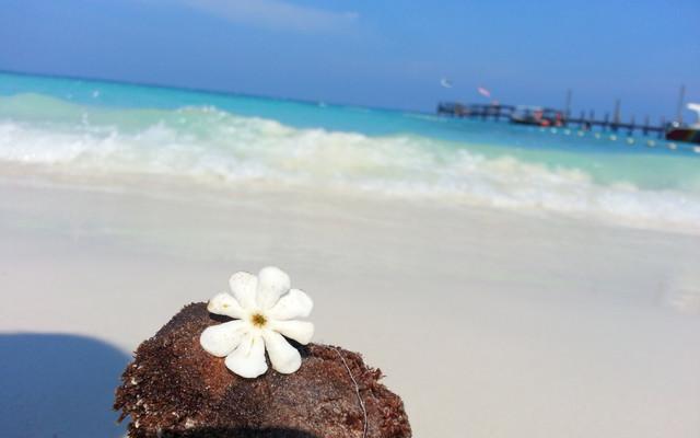 逃离到热浪岛、浪中岛(含详细攻略、岛上酒店对比等实用信息)