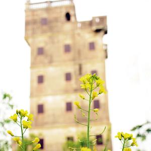 江门游记图文-开平村落两日游,走遍田园看碉楼