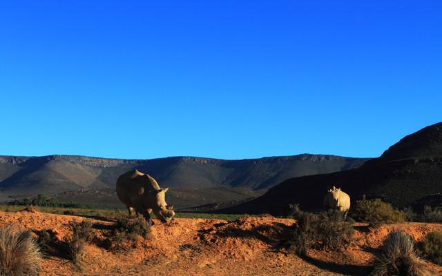 南非洗肺之旅