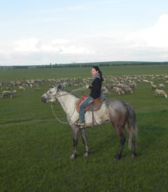 [额尔古纳游记图片] 呼伦贝尔六日游------草原上的任意行走,完美的夏之恋!