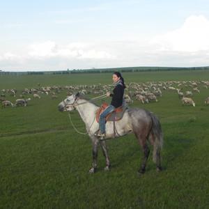 海拉尔游记图文-呼伦贝尔六日游------草原上的任意行走,完美的夏之恋!