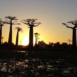 马达加斯加游记图文-馬達加斯加 II