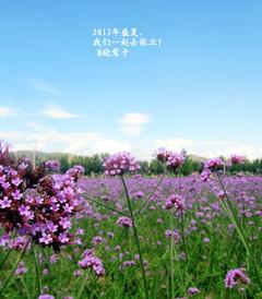 [张北游记图片] 2013年盛夏,我们一起去张北